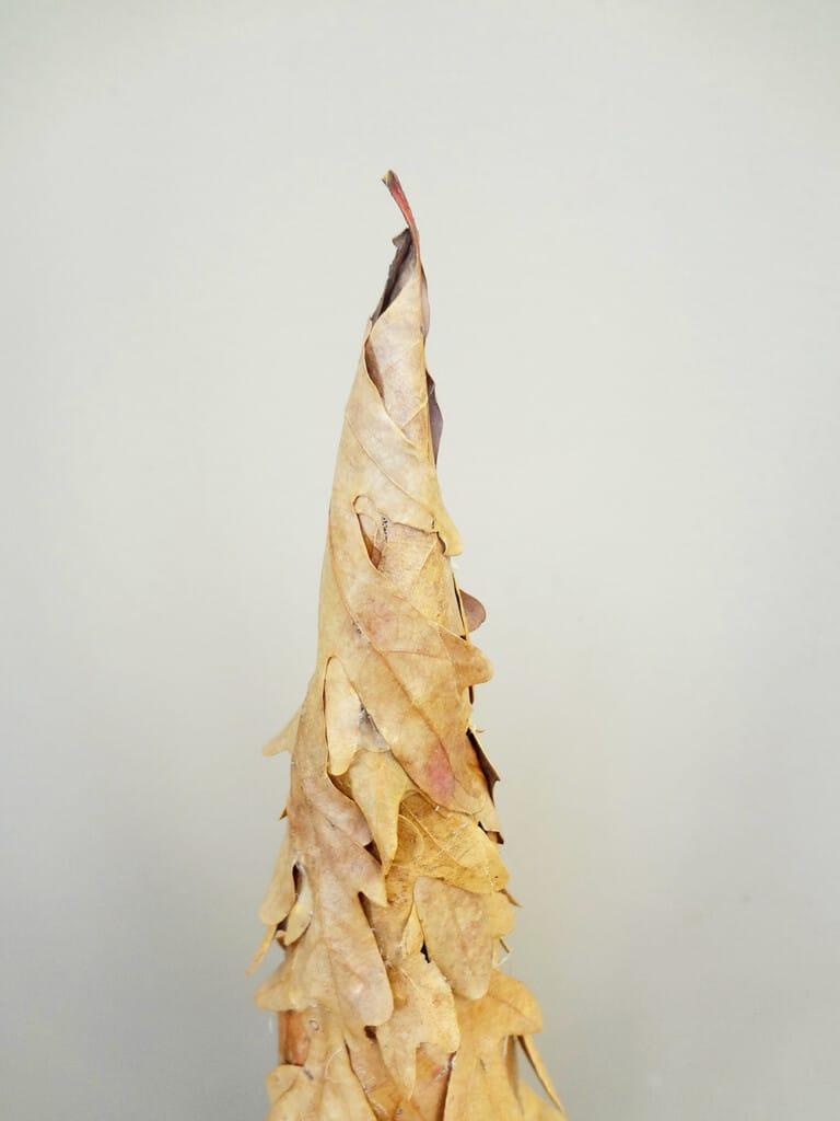 leaf cone tree