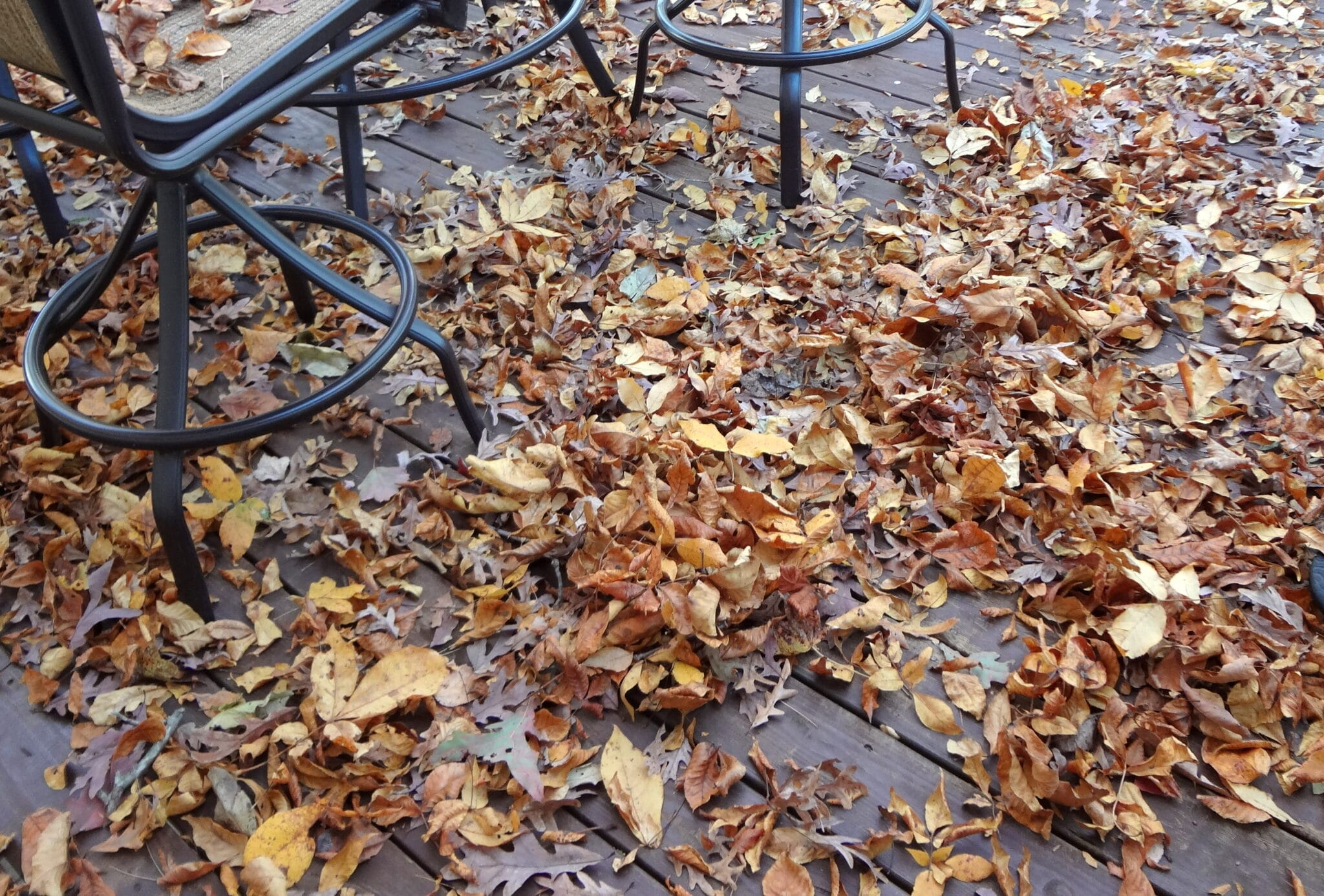 Fall leaves on my porch