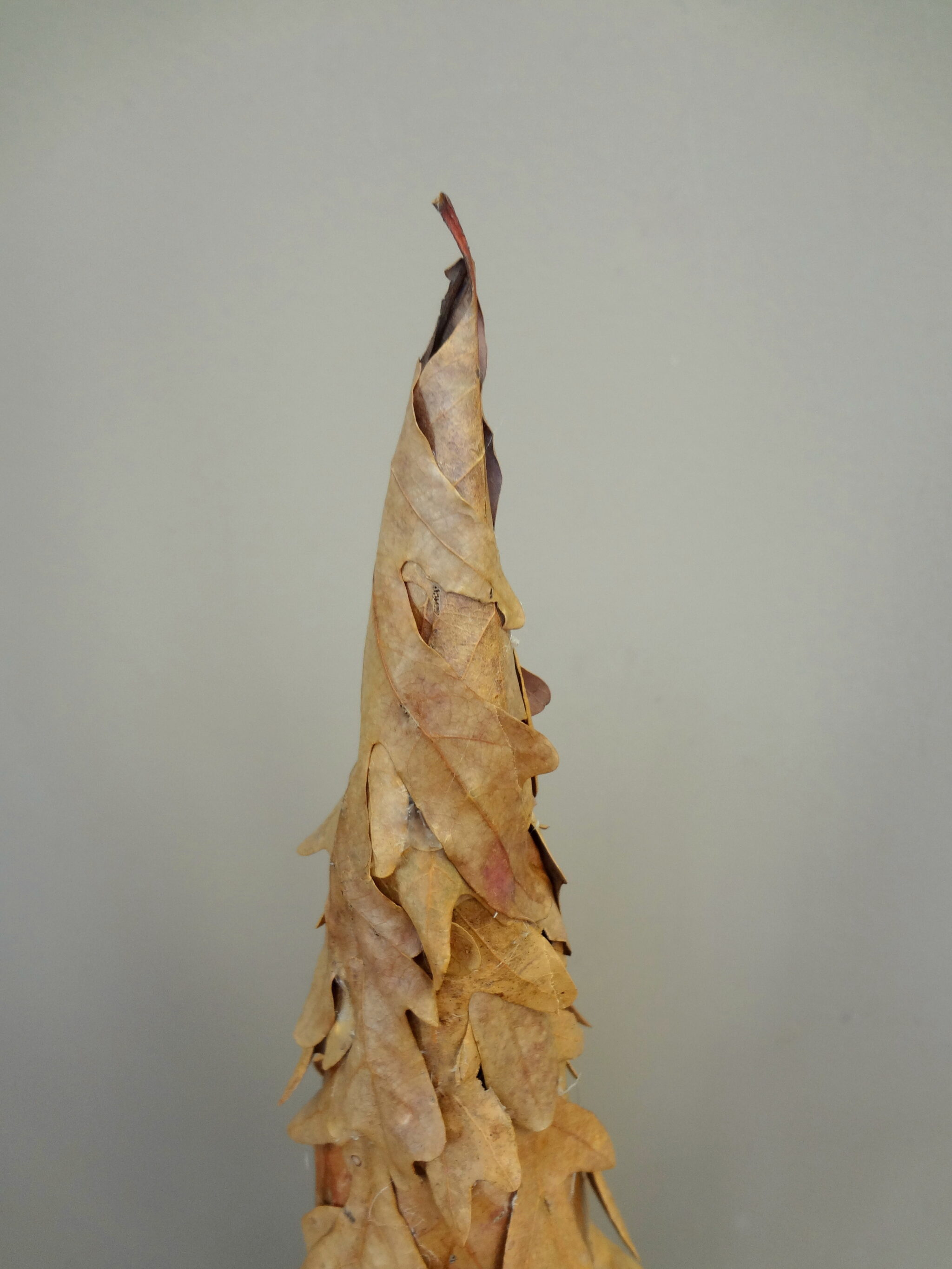 wrap small leaves around top and glue