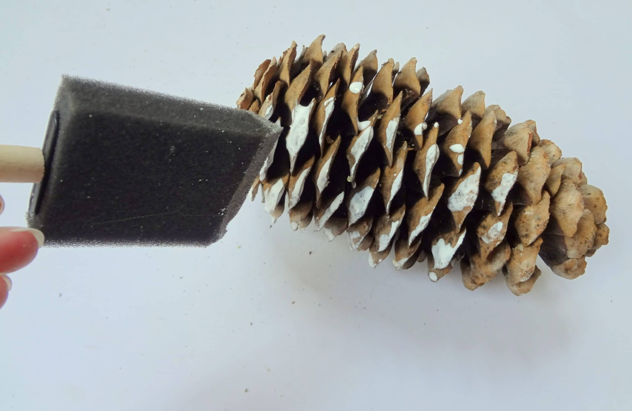 frosted pine cone