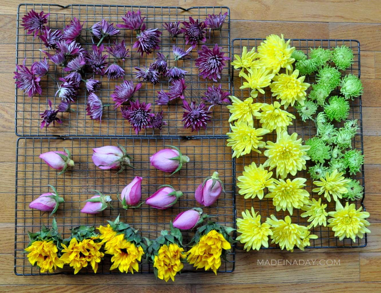 Oven Dried Flowers • Made in a Day