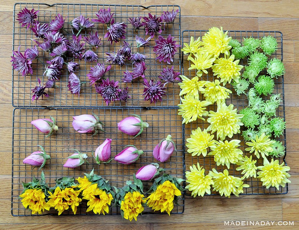 How to dry flowers, how to dry flowers out, drying flowers in the oven, oven dried flowers