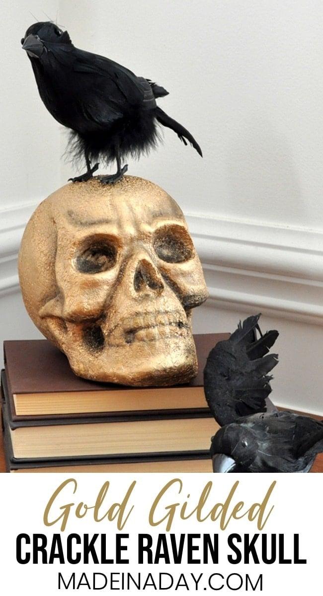 Gold Gilded Skull Halloween Prop