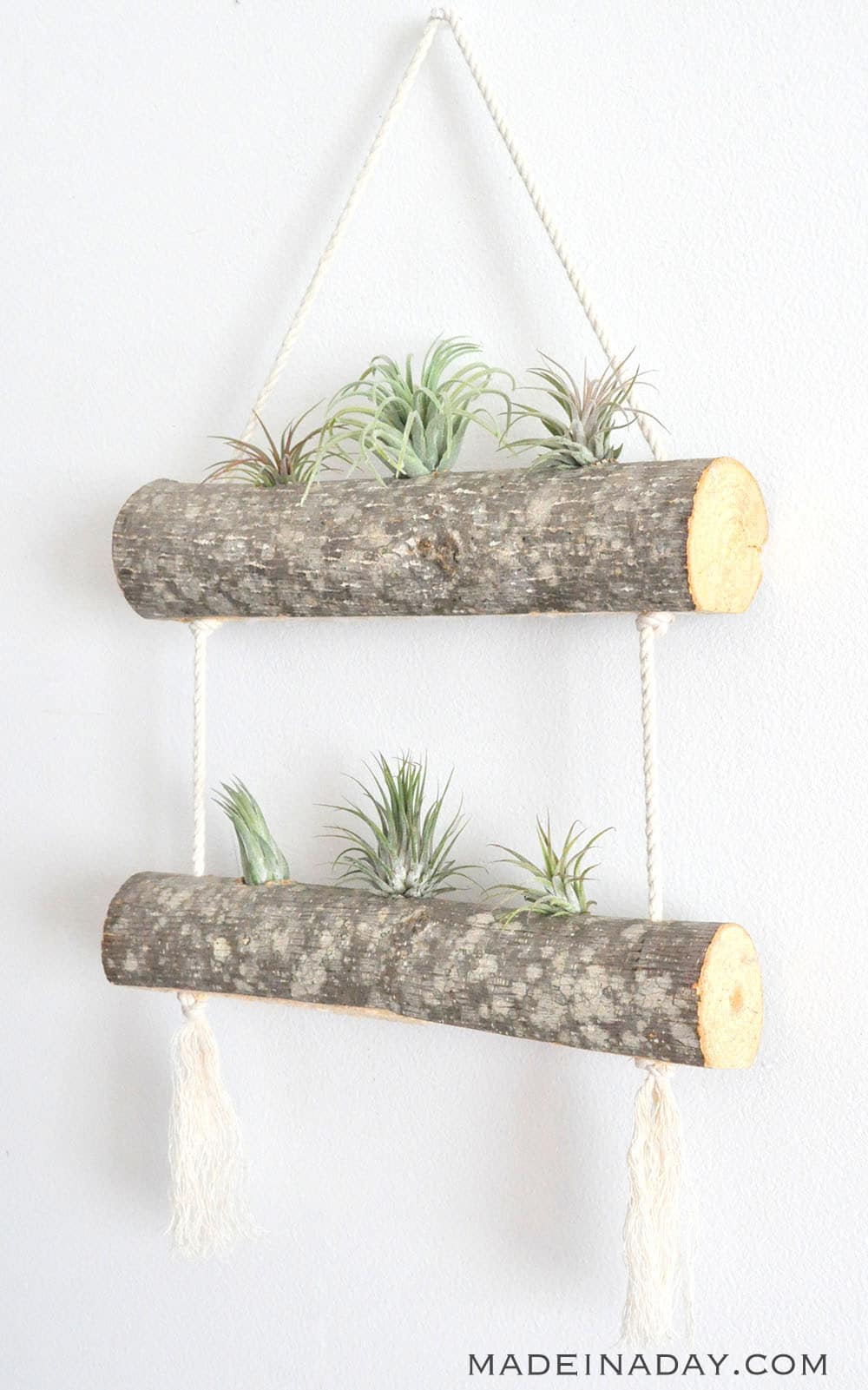 DIY Birch Air Plant Hanger 14