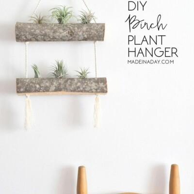 DIY Birch Air Plant Hanger