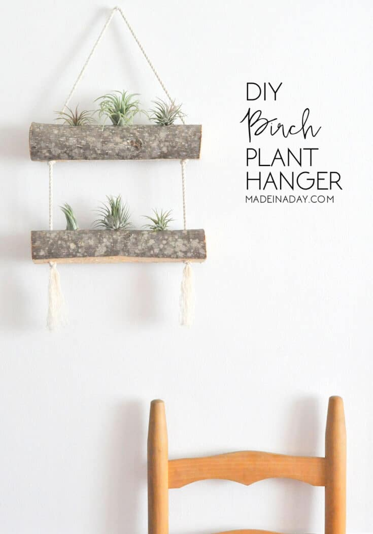 DIY Birch Air Plant Hanger