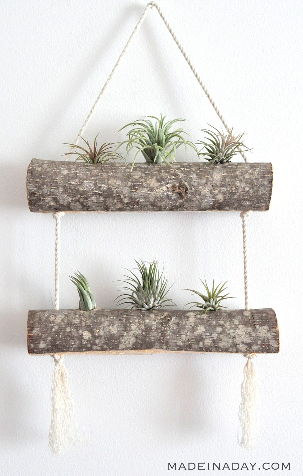 DIY Birch Air Plant Hanger 16