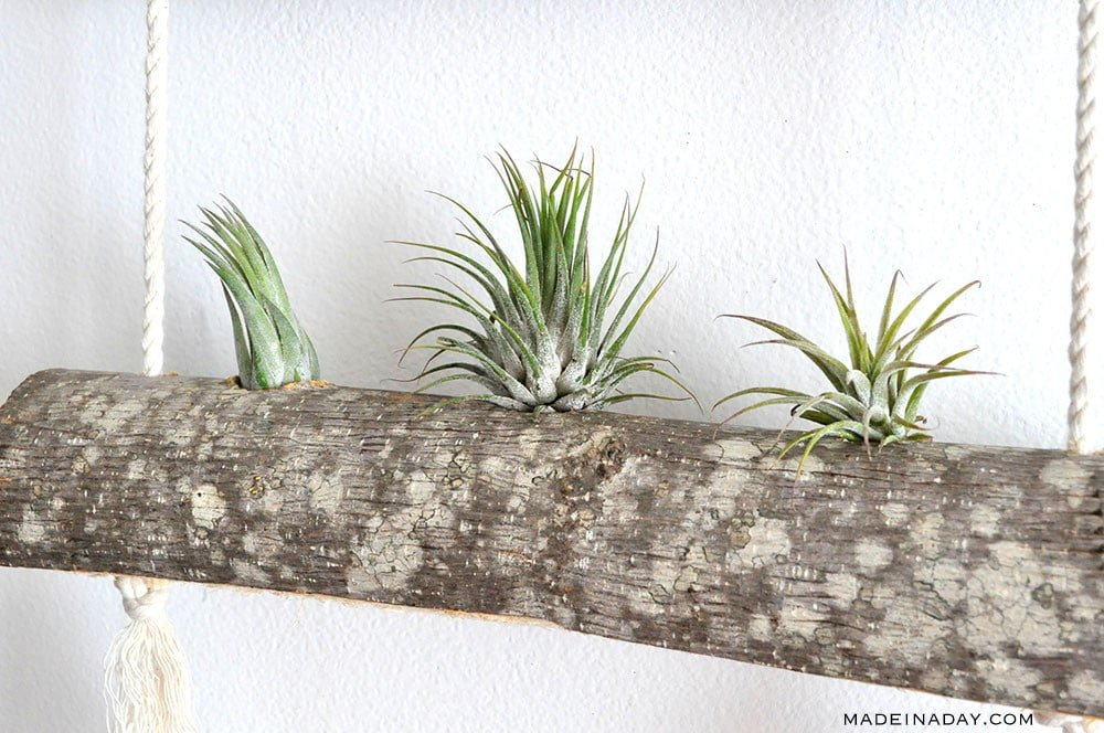 DIY Birch Air Plant Hanger 15