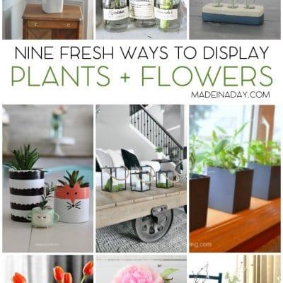 Fresh Ways to Display Plants Flowers