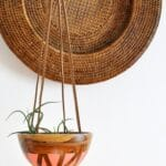DIY Birch Air Plant Hanger 1
