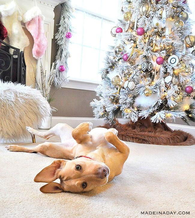 Kalie & the Christmas Tree!