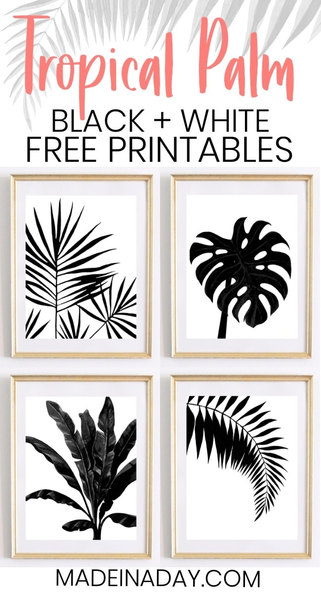 It is an image of Dashing Free Printable Black and White Images