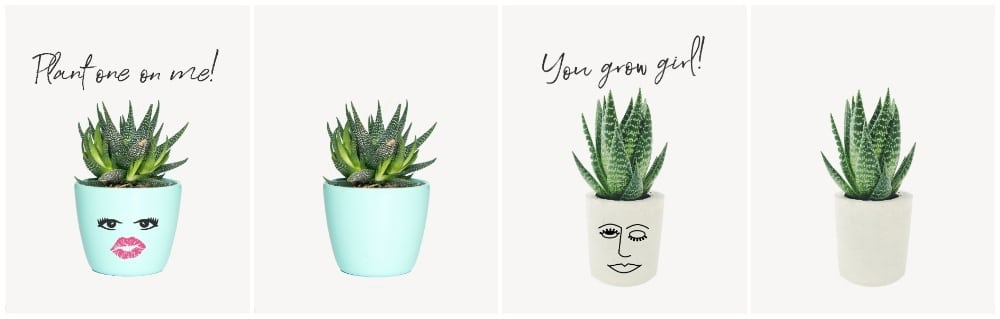 Plant one on me, teal succulent, you go girl printable, succulent wall art