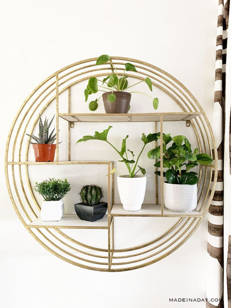 Modern Surf Shack Entryway with Plants 35