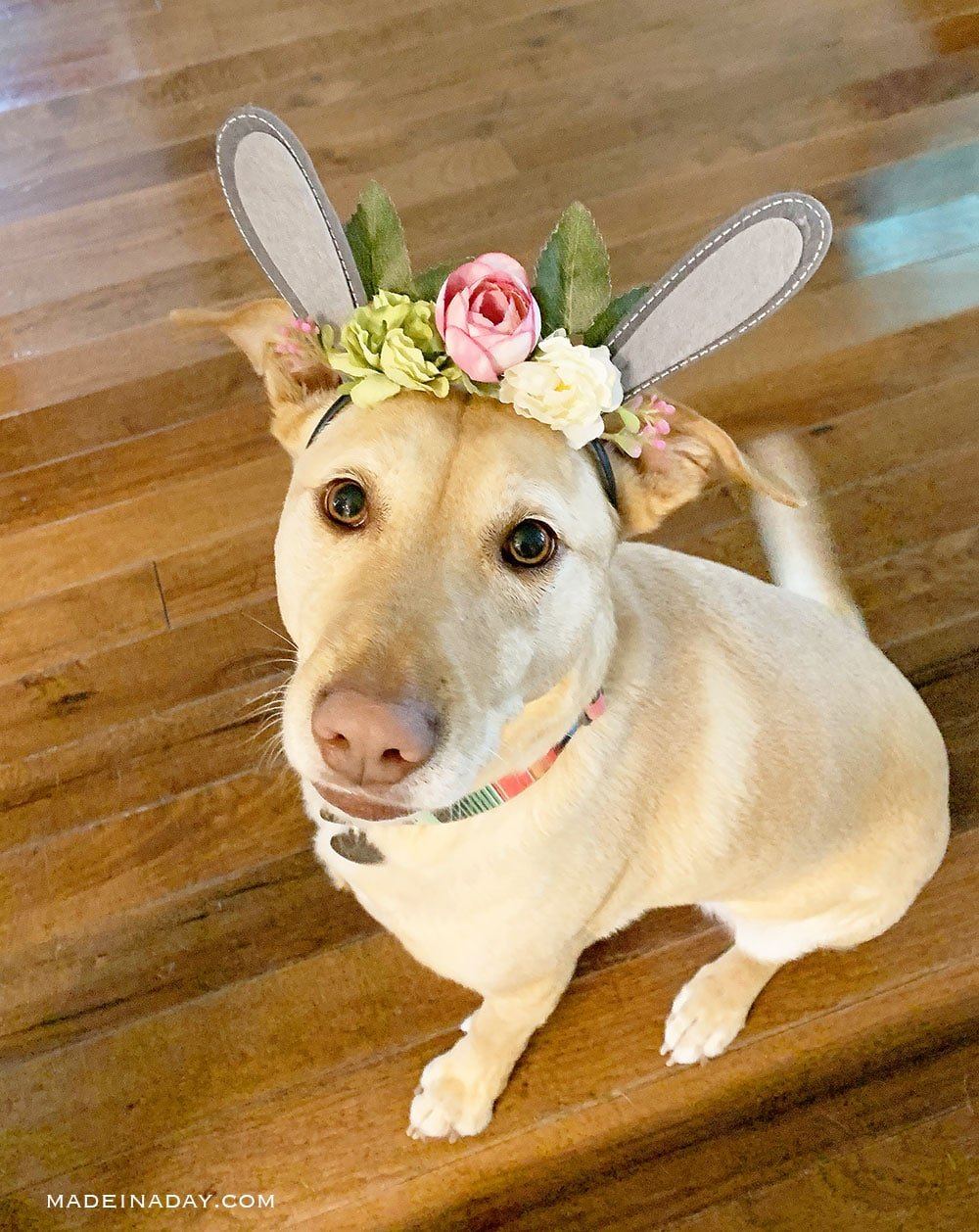 dog with flower headband, yellow dog with flowers