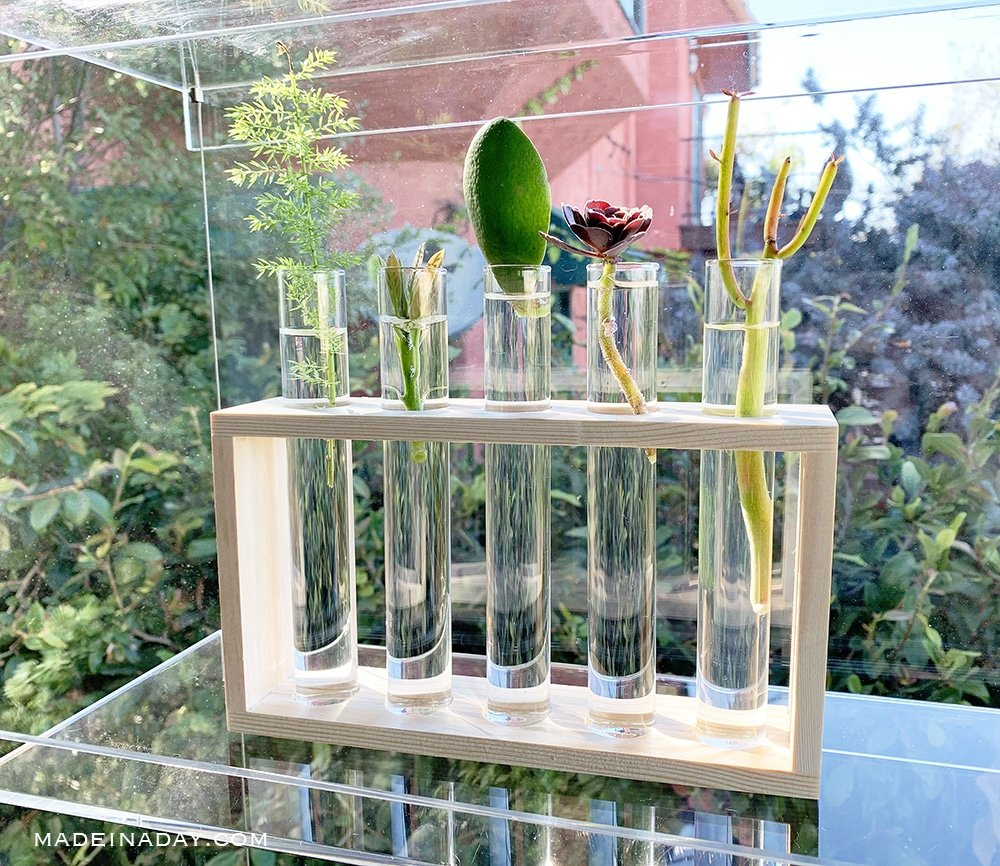 how to propagate plants, test tube plant propagate holder
