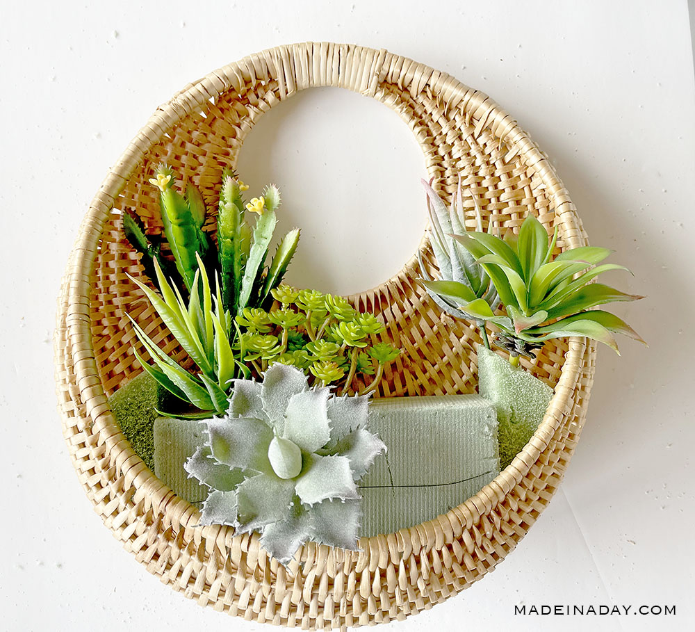 fill in the smaller succulents