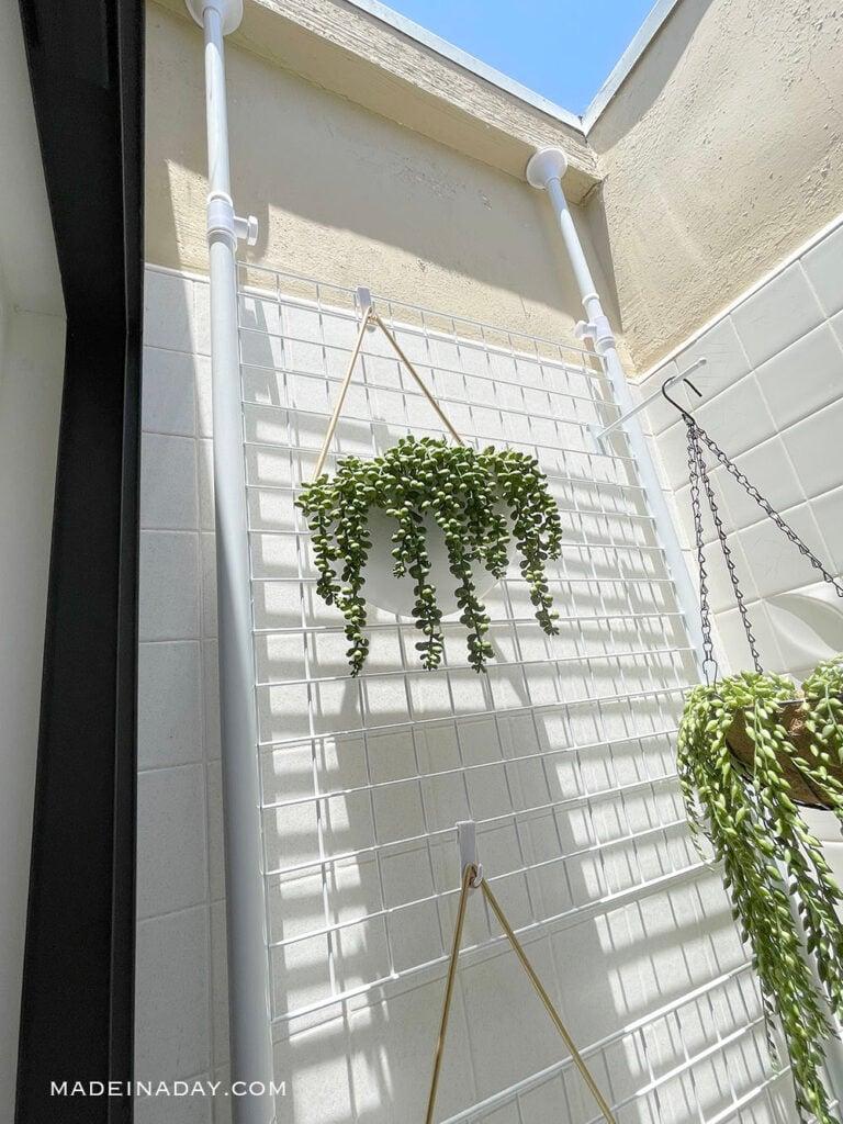 hanging plants in atrium