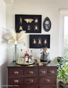 Halloween Taxidermy Gold Mounted Insect Specimens