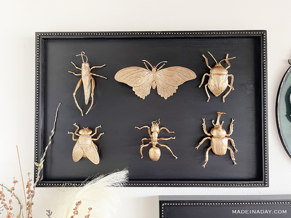 Gold bug taxidermy for Halloween