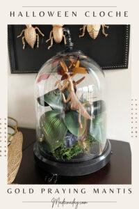Halloween Terrarium Cloche for Praying Mantis Specimen